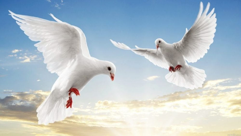 beautiful-birds-flying-hd-best-nature-wallpapers