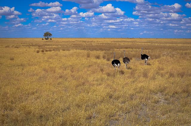 botswana plain