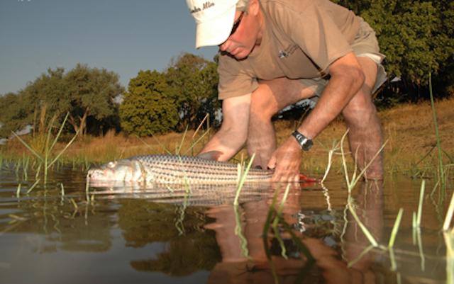 catch and release at tafika fishing safari