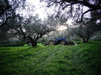 Récolte à l'ancienne dans une ferme Bio