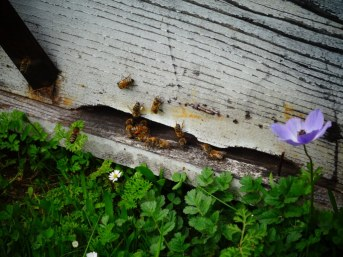 Petit dèj chez les apiculteurs