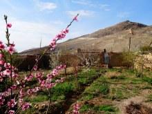 Le merveilleux jardin du vieux Ali
