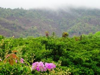 Inde - Jungle