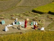 Tamisage du riz à la main