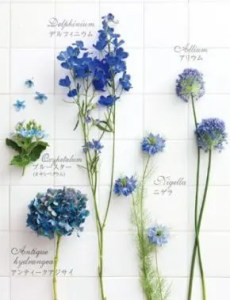 fiori palette blue