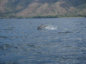 Spinner dolphin. Komodo National Park, Indonesia.