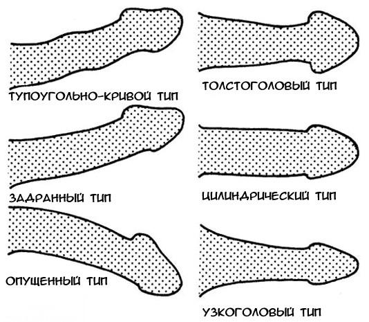 a férfiak péniszének formája és mérete