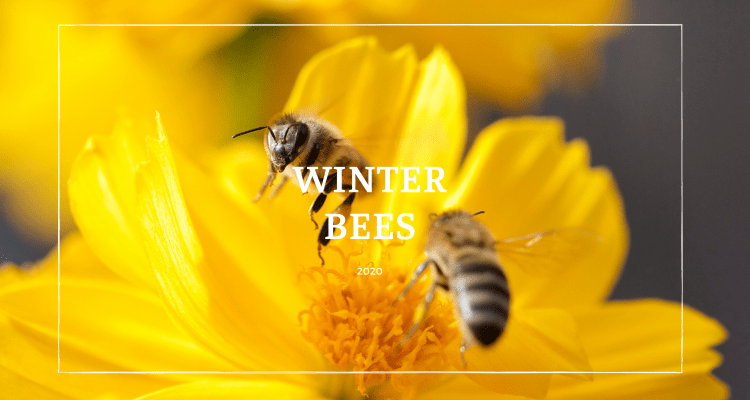 Winter Bees Cleansing Flight
