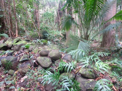 Ancient Hawaiian Garden