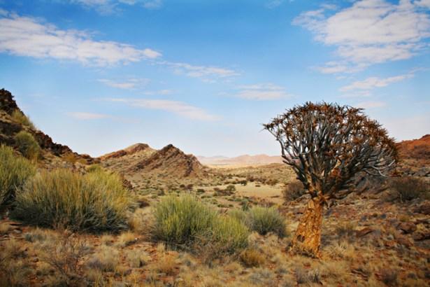 Kalahari Desert (4)