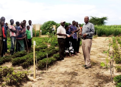 One of the AR researchers, Dr Swai explaining to the farmers the new groundnut varieties