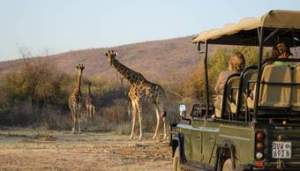 Game Drive Safaris