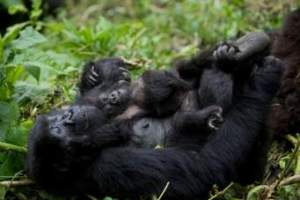 Virunga National Park Re-opening