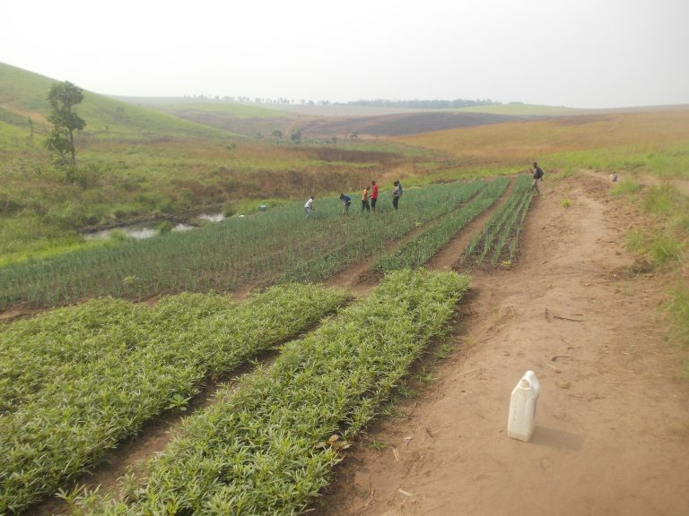 Agricultural-work-with-truck-farming-at-Mamani-6-km-from-Kikwitwith-DJFC-Dynamique-de-la-Jeunesse-feminine-congolaise