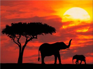 Africa tourism is also attracting the Arabs