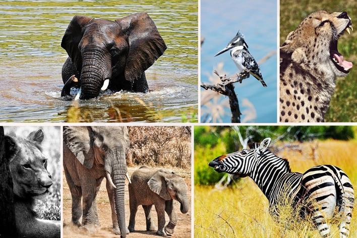 Africa Elite Travel ─ Ultimate Kruger Safari