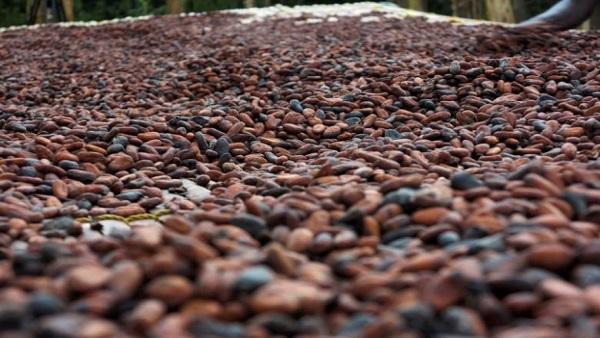 Cocoa from China