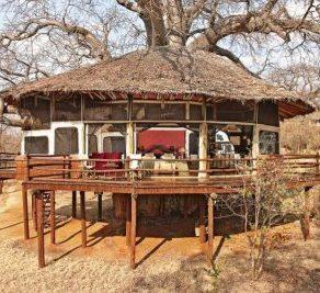 Tarangire Treetop Lodge