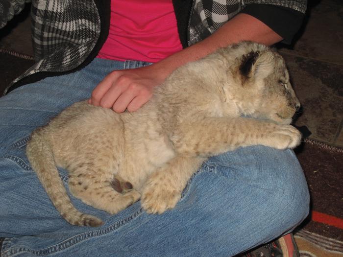 cub-petting-industry-africa