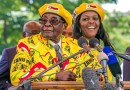 Robert Mugabe's wife exports Elephants, Ivory & Wildlife to Communist China