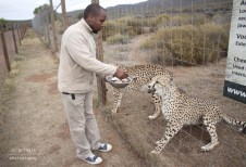African Game Lodge - 14