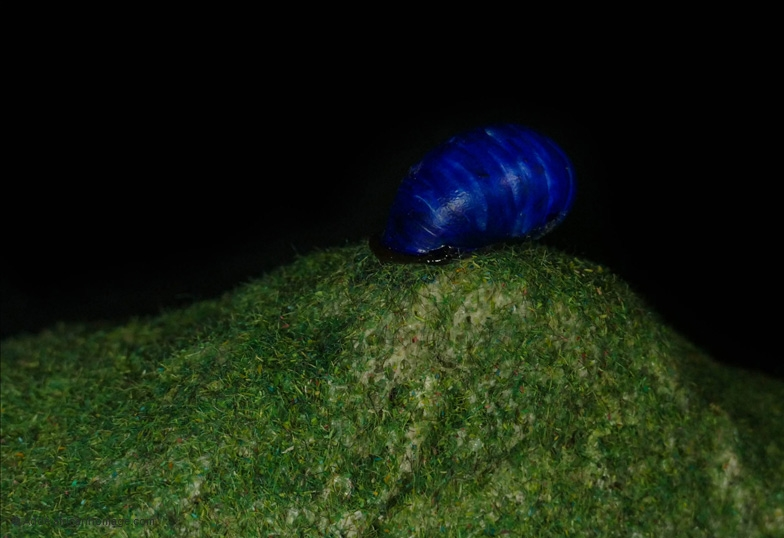 The blue snail, sculpture, Addé, detail