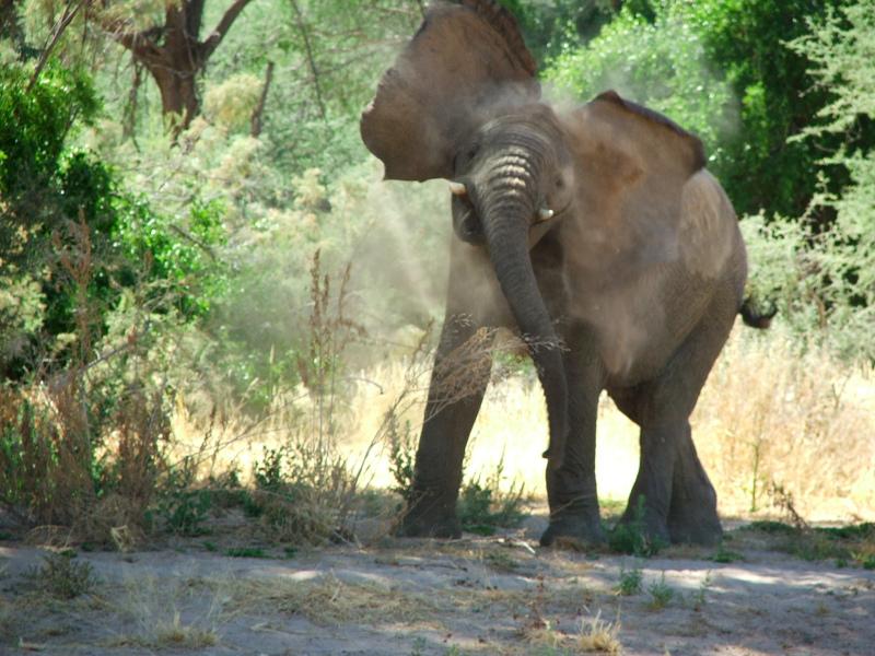 Elephant Mock Charge - Offroad in Brandberg