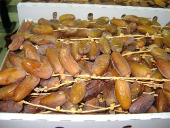 La récolte de dattes enregistrée cette saison dans les différentes régions du gouvernorat de Tozeur est estimée à 52 mille tonnes