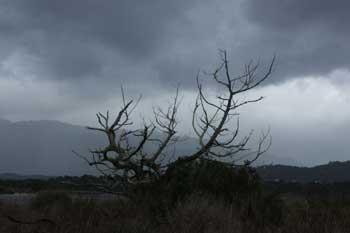 Les vents violents et les pluies enregistrés la semaine écoulée ont porté préjudice à la production piscicole du lac El Bibane