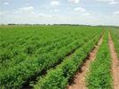 Plusieurs agriculteurs de Béja se disent inquiets des répercussions que peut avoir la pénurie d'engrais chimiques sur la récolte