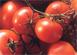 Face à la  situation difficile que connaissent les entreprises du secteur de l'Industrie de la tomate