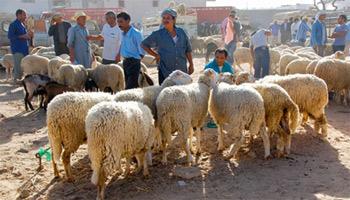 L'Aïd el Idha tombera le mardi 15 octobre dans la plupart des pays musulmans