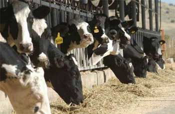 Le ministère de l'Agriculture a appelé