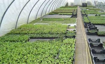Selon les dernières statistiques publiées par l'Agence de promotion des investissements agricoles(APIA)