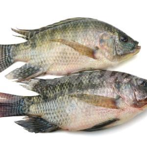 Fresh Tilapia Fish 3kg