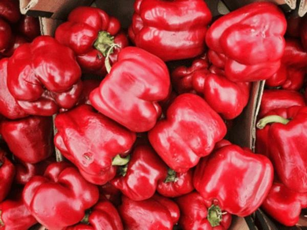 Sweet Red bell Pepper/Tatashe 1 pack
