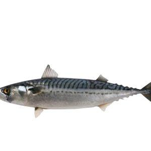 Nigerian Titus Fish