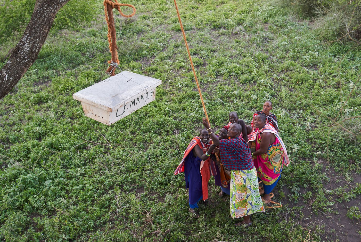 Hanging-Beehives-in-Tanzania-compressor