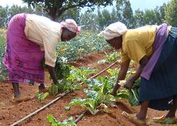 baraka-farming