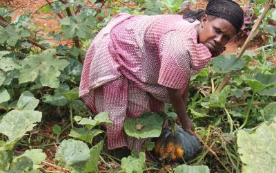 It's Harvest Time for Farmers in Africa, A Season Of Abundance