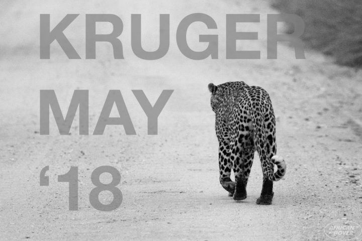 Kruger May 18