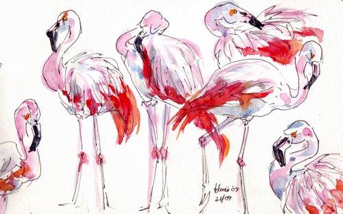 hawaii flamingoes