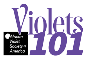 Violets 101 image designating the African Violet Society of America is providing the information