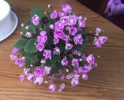 Cirelda Semiminiature Trailer with pink double flowers