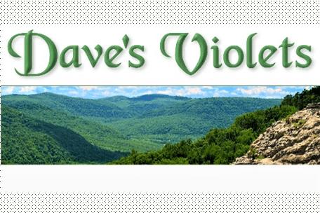 Dave's Violets