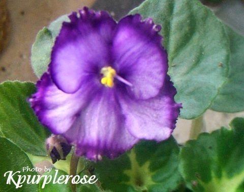 Ultra Violet Dusk
