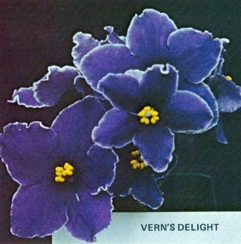 Vern's Delight