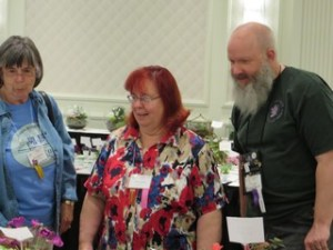 Three judges looking at African violet exhibits
