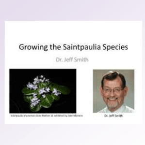 Growing the Saintpaulia Species DVD by Dr. Jeff Smith