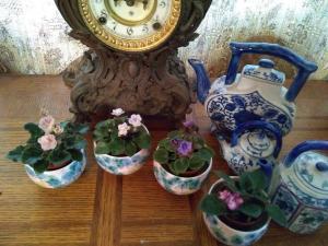 Lindas Secret Garden website photo